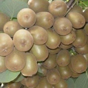 Meyve-Fidanları-5