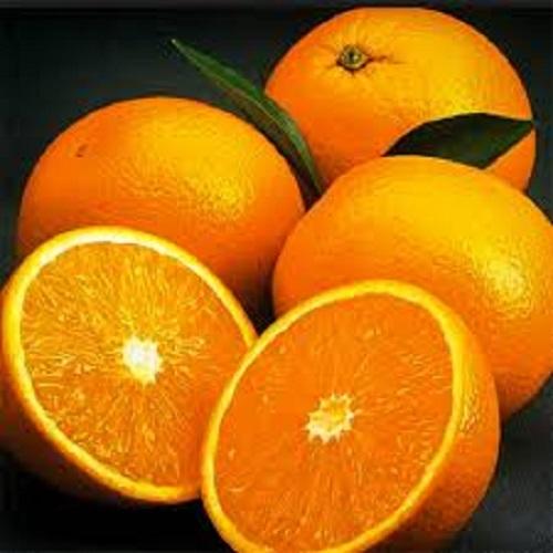 Portakal Fidanı 6